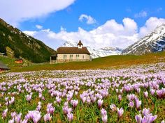 Spring in Golzern, Switzerland ♥