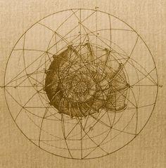 Sacred geometry of the nautilus shell