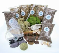 Terrarium Starter Kit - Ultimate - The Art of Succulents Large Terrarium, Terrarium Kits, Terrariums, Decorative Pebbles, Wooden Slices, Selection Boxes, Polished Pebble, Christmas Gift For Dad, Free Plants