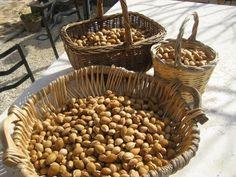 Masseria Due Torri, Apulia, Italy. Our organic almonds