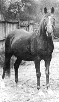 Risala, 1900