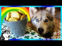 DIY POT OF GOLD DOG TREATS   St Patrick's Day 🍀   DIY Dog Treats   Snow Dogs Snacks 67 - YouTube