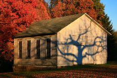Spooky Tree Reflection