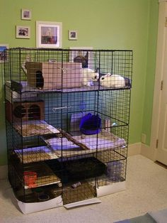 good idea for inside cages use organizer cubes as walls for a rabbit habitat. Hold walls together and carpet/grass to the floor with zip ties. Use a shower liner around the bottom to protect flooring.