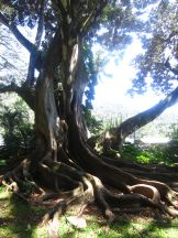Nu'uanu Valley Park and Queen Emma's Summer Palace