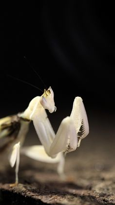 macro insect Motion Design