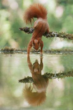 FUNNY SQUIRREL (Eekhoorn)