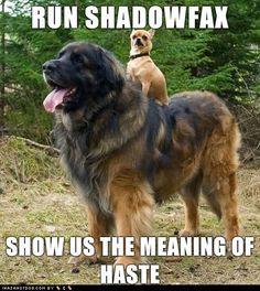 run, Shadowfax