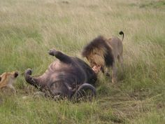 Yum King Travel, East Africa, Charity, Journey, Pictures, Predator, Animals Images, Photos, Photo Illustration