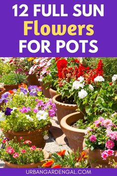 Full sun flower plants for containers - Here are 12 beautiful flowers that will thrive in pots in a sunny spot. #containergarden #flowers #flowergarden Container Flowers, Container Plants, Container Gardening, Garden Planters, Garden Beds, Full Sun Flowers, Love The Earth, Planting Flowers, Flower Gardening