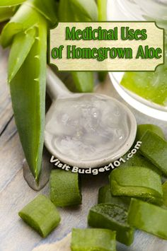 Aloe Vera has been grown for years as a beautiful houseplant, but did you know that you can grow aloe vera for a number of unique medicinal ... (click on photo for more)