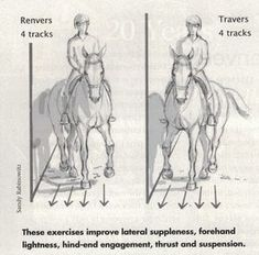 The most important role of equestrian clothing is for security Although horses can be trained they can be unforeseeable when provoked. Riders are susceptible while riding and handling horses, espec… Horse Exercises, Horse Riding Tips, Horse Facts, Riding Lessons, Dressage Horses, English Riding, Horse Training, Training Tips, Training Online