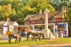 Burley Cross, New Forest, Hampshire