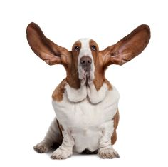 We're all ears!  We love to hear from top #quality #new #venues about to open Events Inc