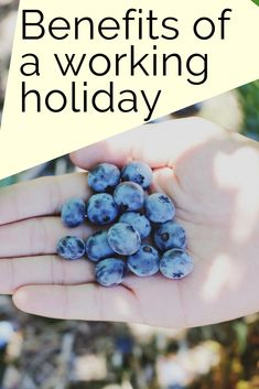 There are many benefits of a working holiday. If you are considering a working holiday, this will help you make your decision (and convince your parents) Travel Advice, Travel Tips, Travel Guides, Working Holidays, Holidays Around The World, Weekend Trips, Solo Travel, Travel Pictures, Travel Inspiration