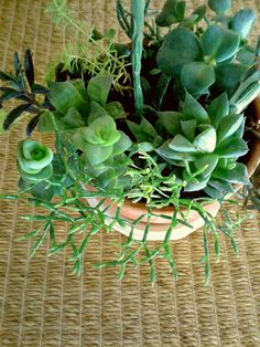 Succulent Garden In A Terracotta Planter For From One Person Online Plant Nursery