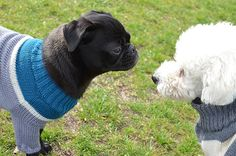 100 % Merino-Wolle Handmade Quality. A Friendship forever. OTELLO. The Dog Pullover #OTELLOONLINE #DOGJUMPER #HUNDEPULLOVER #OTELLOPULLOVER Dog Jumpers, Dog Sweaters, Friendship, Dogs, Handmade, Animals, Heroes, Animais, Animales