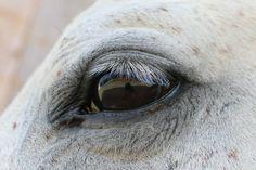 See YOU Horses, Lifestyle, Animals, Animales, Animaux, Horse, Words, Animal, Animais