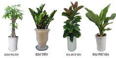 Những loại cây hay được dùng khi cho thuê cây cảnh - http://caycanhnoithat.vn/blog/nhung-loai-cay-hay-duoc-dung-khi-cho-thue-cay-canh/