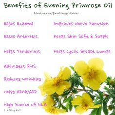 1000+ images about Evening primrose on Pinterest | Primroses, Oil and ...