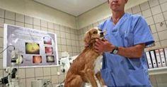 Un subsidio para crear hospitales gratuitos y refugios para animales sin hogar