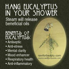 Hang a bundle of eucalyptus, with natural garden twine, from your shower rod, away from the spray of the water. The heat and steam help to activate the herb's essential oils which can ease congestion. Enjoy the scent for a few weeks as you take a hot shower.