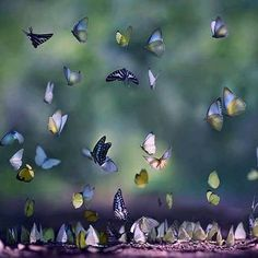 Photograph of Butterfly Migration by Le Anh Tuan. Beautiful Creatures, Animals Beautiful, Cute Animals, Tier Fotos, All Gods Creatures, Beautiful Butterflies, Butterflies Flying, Amazing Nature, Belle Photo