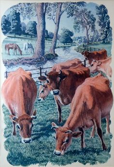Jersey Cows - by C. Tunnicliffe from the book 'Both Sides of the Road' by Sidney Rogerson. This painting was actually cut out of the book and has since faded from being displayed as a framed picture. I bought it in a Charity Shop in Bude, Cornwall. Cow Illustration, Farm Art, Nature Artists, British Wildlife, Feather Painting, Cow Art, Royal College Of Art, Landscape Drawings, London Art