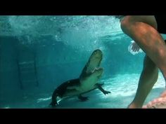 ▶ Unwelcome Gator Takes a Dip in Family Pool | Gator Boys - YouTube