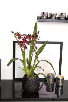 Orkidé: http://www.mestergronn.no/blogg/orkide-forforende-og-vakker/