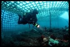 Shipwreck Scuba Tours in the Adriatic Sea Shipwreck, Battleship, Titanic, Costa, Military, History, Beach, Animals, Image