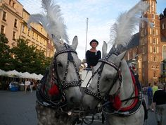 Krakow - love - inspiration - animals - horses - market square