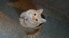 Kitten diy shirt