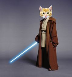 Star Wars Trailer The Force Awakens Jedi Cats Funny Cat Videos, Funny Cats, Youtube Cats, Ron Paul, Right Meow, The Old Republic, The Force Is Strong, Knight, Funny Quotes