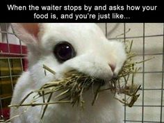 Funny memes likes everyone. But if we can add little bit stupidity here then funny memes become more funny. 20 Stupid Memes Just for You. Cute Animal Memes, Funny Animal Quotes, Animal Jokes, Funny Animal Pictures, Cute Funny Animals, Funny Cute, Funny Bunnies, Bunny Meme, Funny Pics