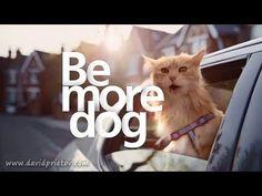 BE MORE DOG - Anuncio O2 - Subtítulos Español - Castellano