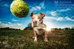 morethanphotography: Total Concentration by dogbreathphotography