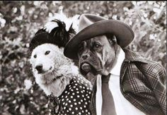 Canine Chivalry