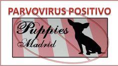CLOSING SHOP PUPPIES MADRID