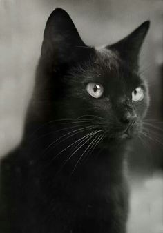 Amazing eye color on this beautiful black cat - God created ALL and therefore ALL is perfect just as it is... ;-)