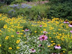 Let wildflowers bloom where they're sown by spreading mixes, some of which include grasses for textural interest and herbs for delicious scents.