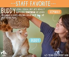 Dominika, our Lead Adoption Counselor, loves Buddy because though he looks tough, he's really just a big teddy bear!
