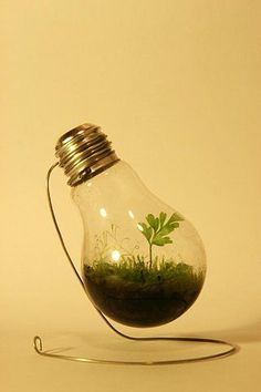 terrarium in a light bulb