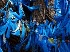 photo of Mongolia, blue cloths left as offerings at the foot of a holy shaman tree
