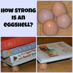 How strong is an eggshell science activity. Homeschool science and kitchen friendly science activity.