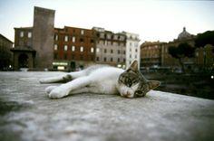 Largo Argentina--Cat Sanctuary and supposed spot of Julius Caesar's assignation