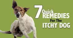 "They call it ""The Dog Days of Summer"" for a reason! Rashes and bites are bound to happen, so here are seven quick ways to ease your dog's itch . . ."