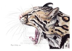 Ocelot by meaghanr