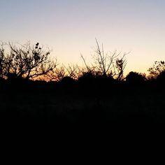 Sunset this evening. Walking the (new) dog. So happy cat is back after 4 days...big change for everyone  .  .  .  #southoffrance #sundown  #sunset #landscape #nature #naturelovers #france #coucherdesoleil #slowliving #livethelittlethings #nothingisordinary #spring #eveningwalk #dogwalk #tryingsomethingnew #garrigue #slowlife #walking #sky #instamood #instamoment #naturephotography #nightfall #provence
