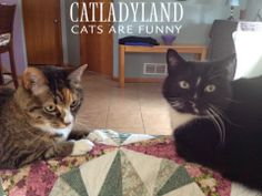 Catladyland: Cats are Funny: Revolt Around the Corner